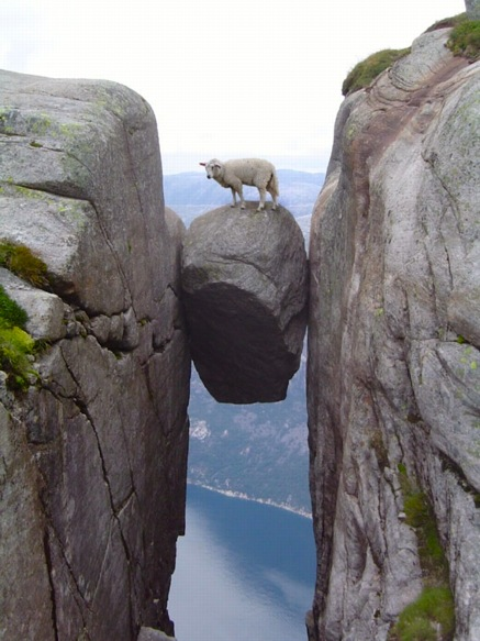 kjerag_sheep.jpg